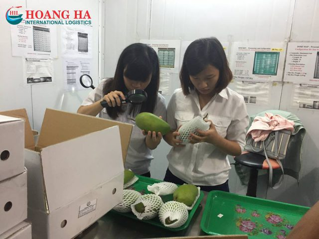 http://en.hoangha.com/wp-content/uploads/sites/3/2016/09/FRESH-MANGO-640x480.jpg